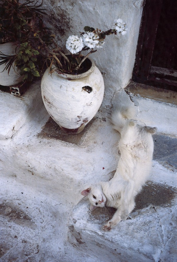 white cat greece