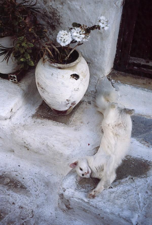 white cat greece