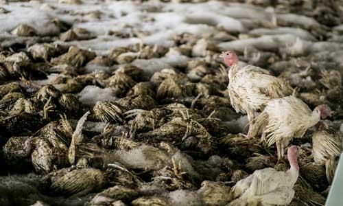 virus penyebab penyakit pada hewan