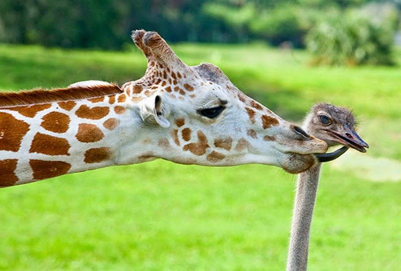 http://3.bp.blogspot.com/-R2ufiQeO4xo/U-E7tgOI8gI/AAAAAAAABBY/-CO2L4_Eo4g/s1600/Animal+Friendship+11.jpg