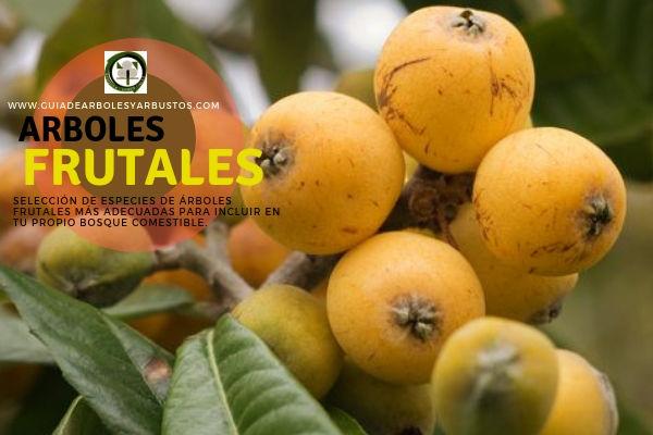 Seleccion de Especies de Arboles Frutales en España para los Bosques de Alimentos