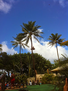 Man climbing coconut tree at the Polynesian Cultural Center in Oahu