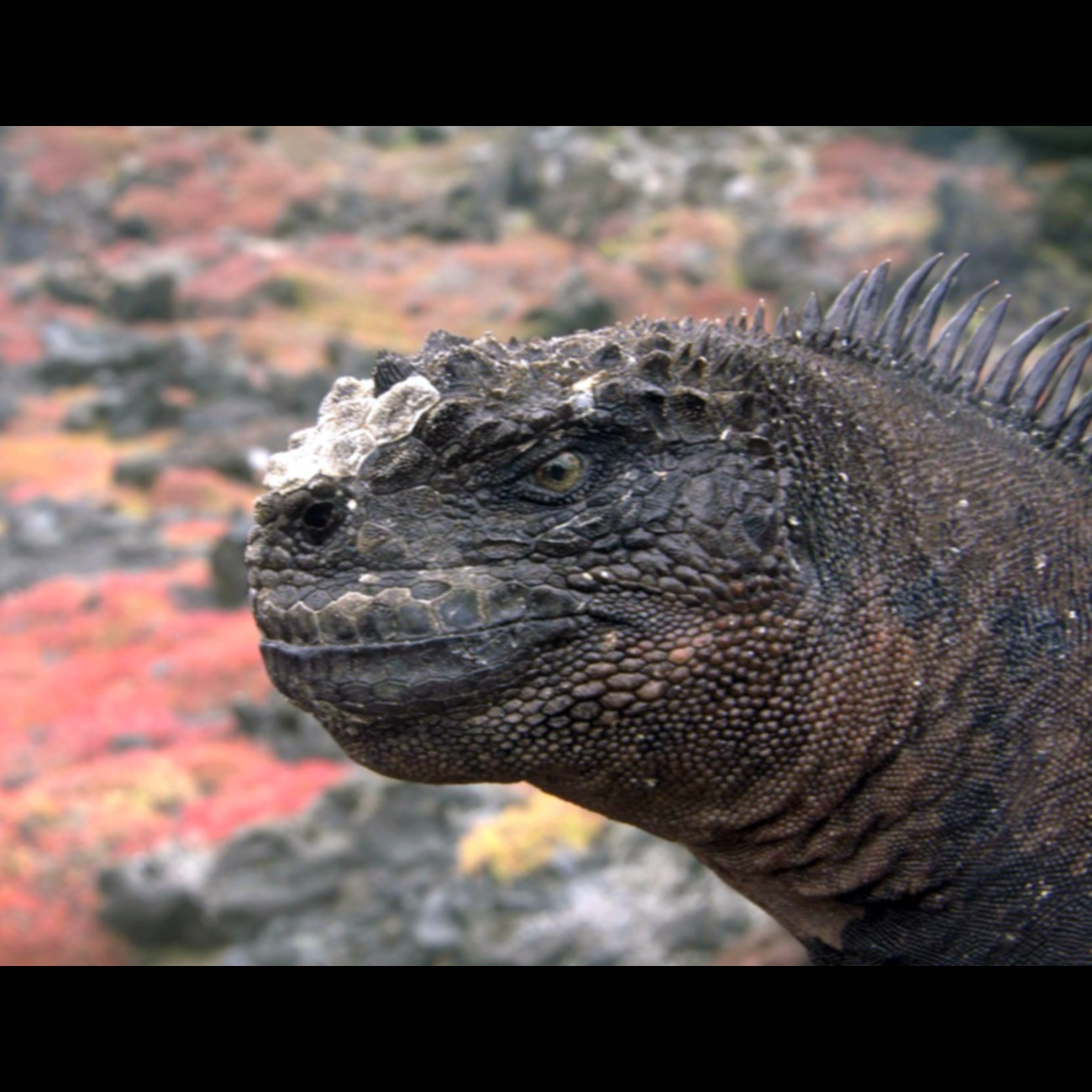 Species New to Science: [Herpetology • 2017] Shedding Light On the ...