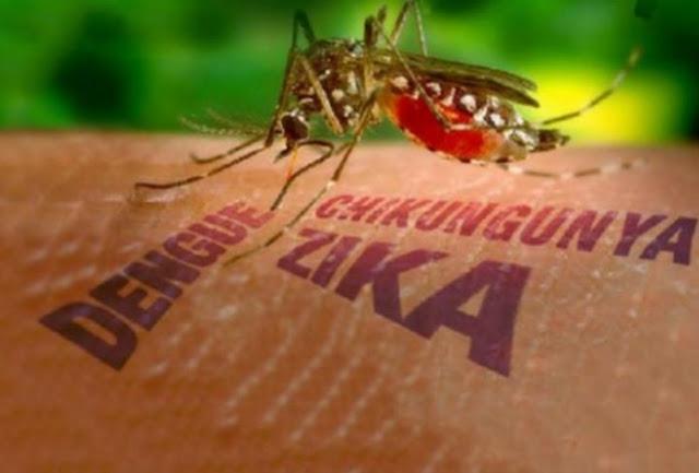 Mosquito, salud