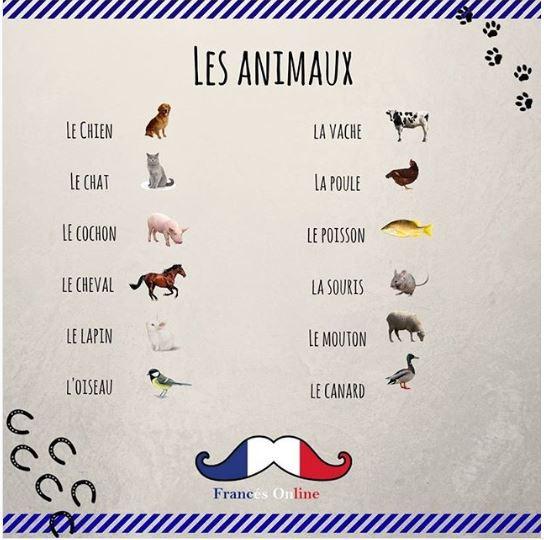 Zwierzęta - słownictwo 5 - Francuski przy kawie