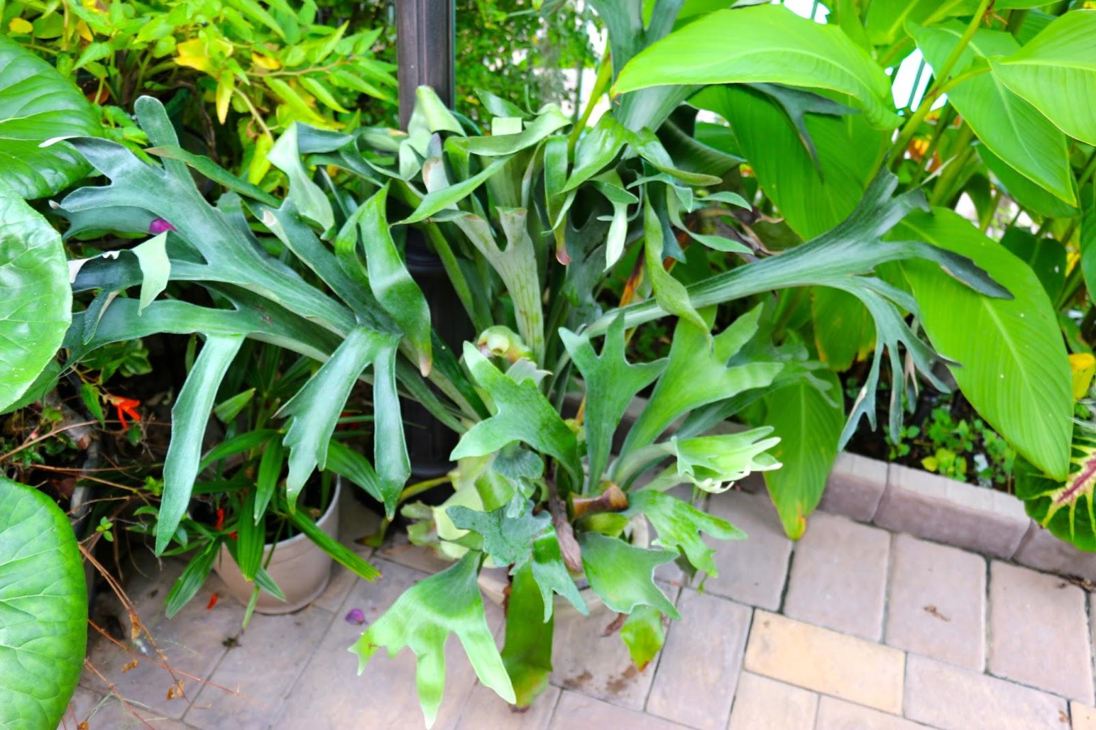 tropical gardening in new york city a few of my ferns