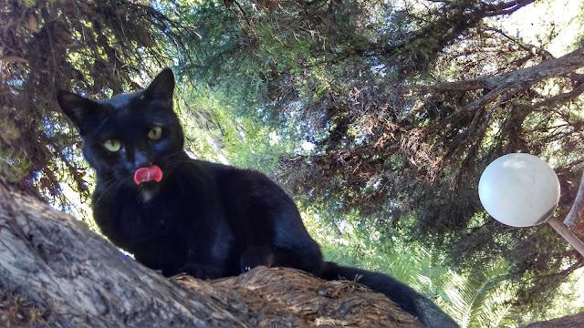 Um gato preto em uma árvore do Parque General San Martín, em Mendoza.