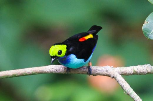 Just For Sharing Amazon Rainforest Birds Pictures