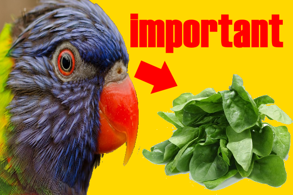 Leafy-vegetables-and-their-benefits-to-birds