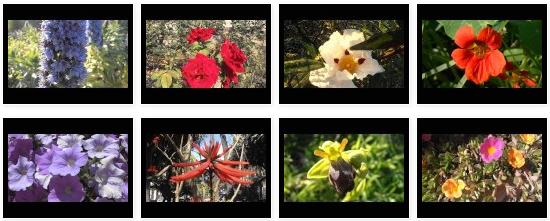 Flores y plantas con flores
