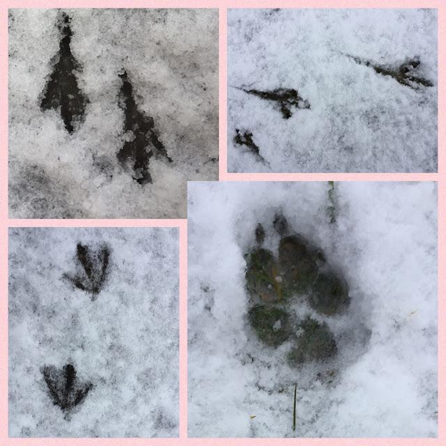 Hundespur und Vogelspur im Schnee