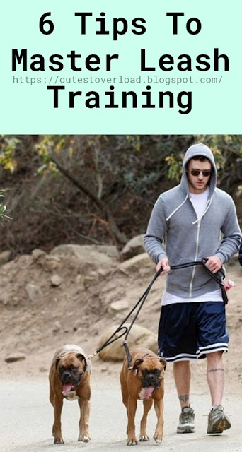 6 Tips To Master Leash Training