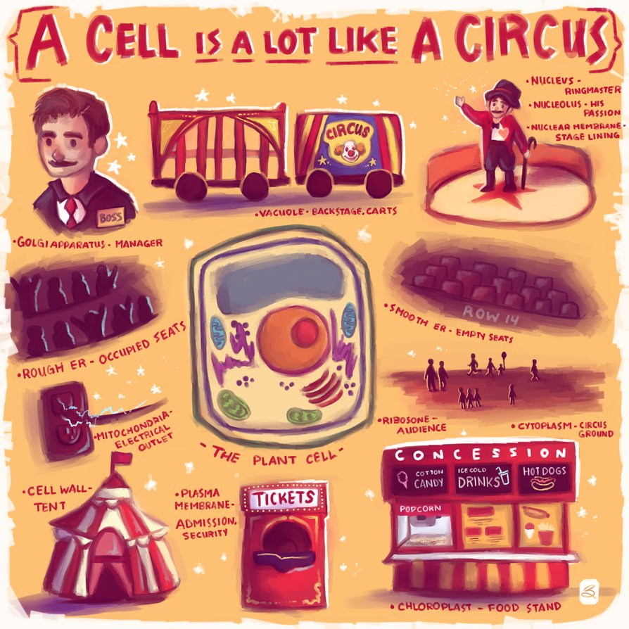 cell analogy examples