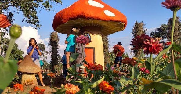 Taman Bunga Celosia Gedung Songo