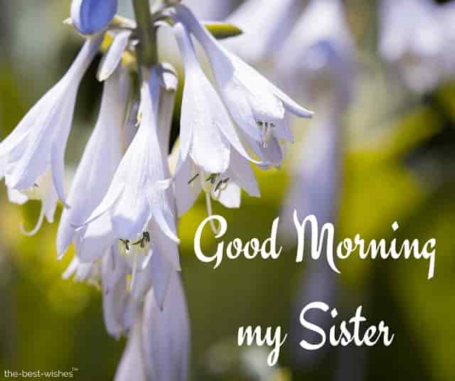 good morning my sister