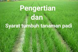 Pengertian dan syarat tumbuh tanaman padi berdasarkan jenisnya secara lengkap