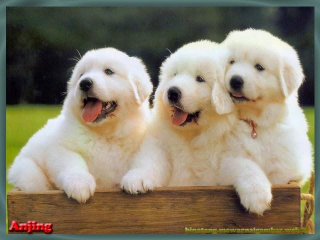 57 Gambar Binatang Anjing Lucu Gratis Terbaru