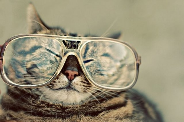 Hipster cat wearing big glasses. Better with a mustache?