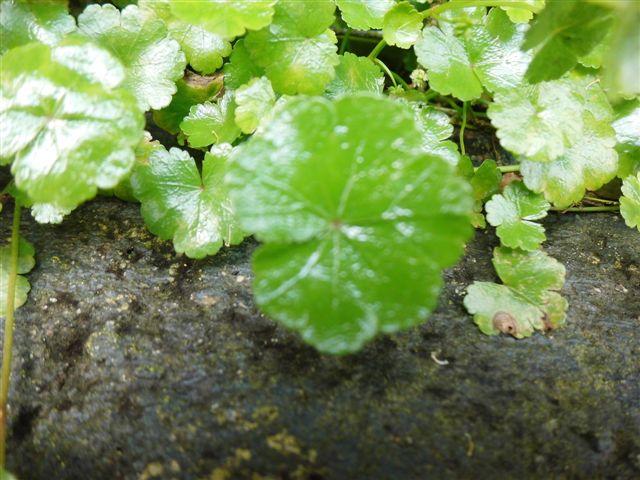 plant chamaedorea is wit uitgeslagen help