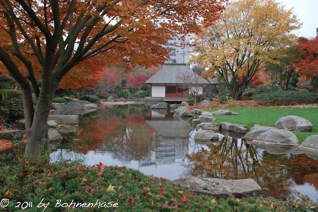 bohnenhase bento japanese garden hamburg planten un blomen autumn 2011. Black Bedroom Furniture Sets. Home Design Ideas