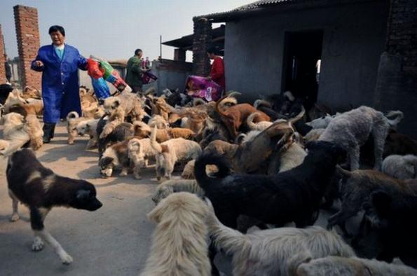 Το μεγαλύτερο καταφύγιο αδέσποτων ζώων! (Εικόνες)