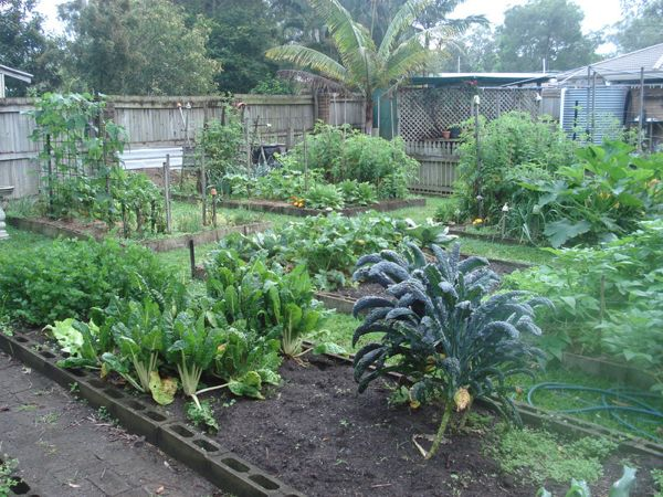 How To Start A Vegetable Garden Part 2 Down To Earth