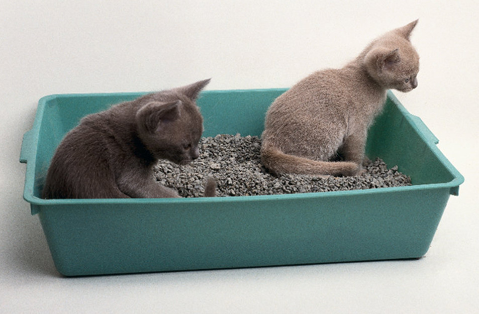 More Cats Means More Litter Boxes