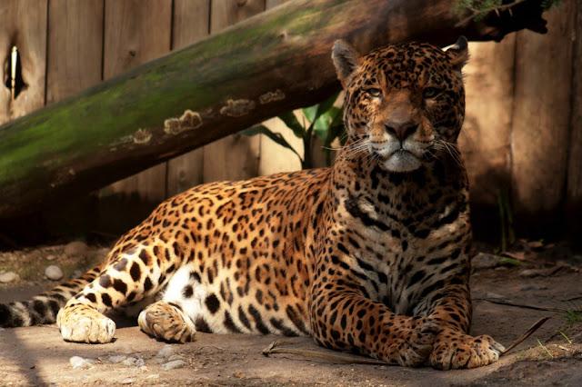 Visitar o Zoológico de Quilpé no verão em Valparaíso