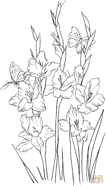 Gladiolus  Coloring Page  Supercoloring Drawing Flowersflower
