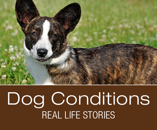 Dog Conditions - Real-Life Stories: Is there a Connection between Star's Mysterious Lameness and Skin Issues?
