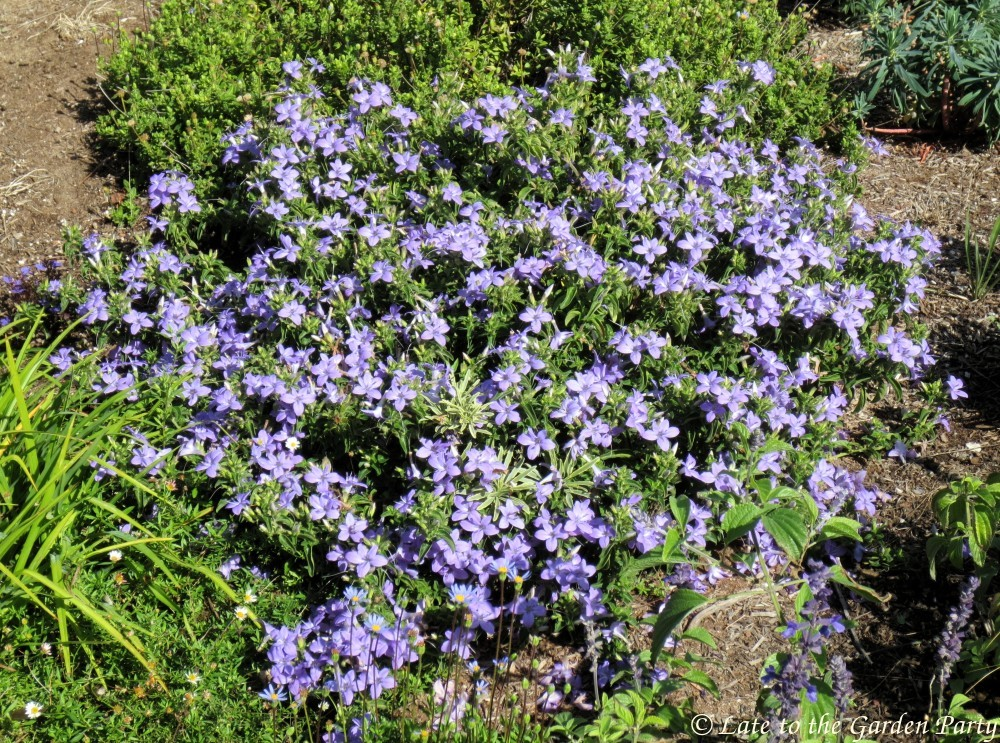 Garden plants for october-4611