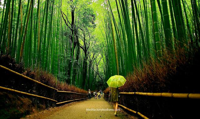 Prepárate en la vida como un bambú, hermosa metáfora