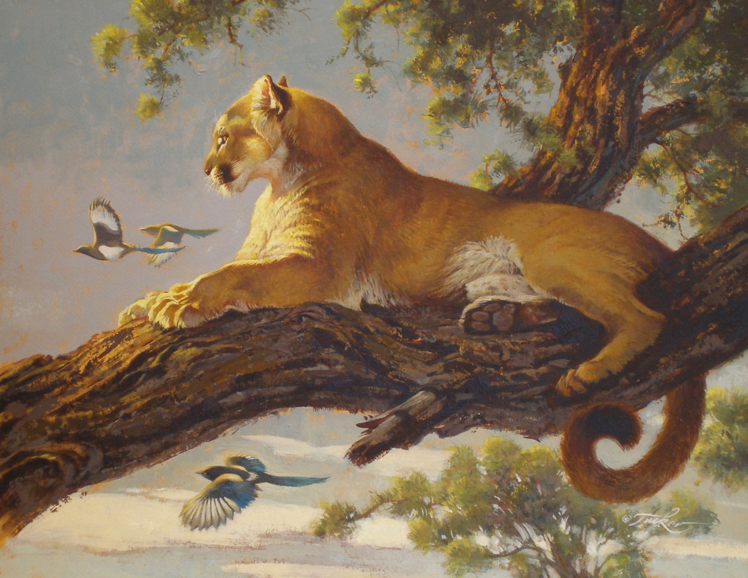 animal famous paintings summer tucker painting ezra magpie artists most mountain lion google cougar moran thomas lions society rocky wildlife