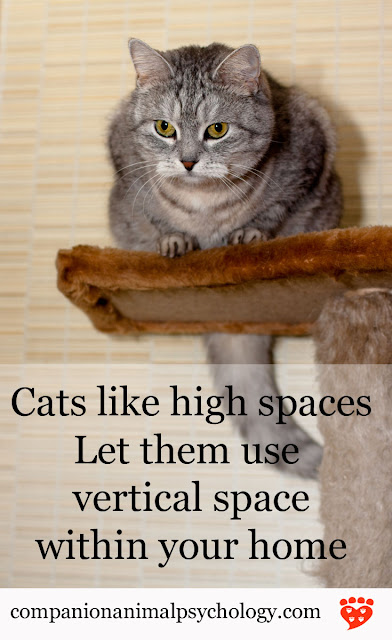 A grey cat sits at the top of a cat tree