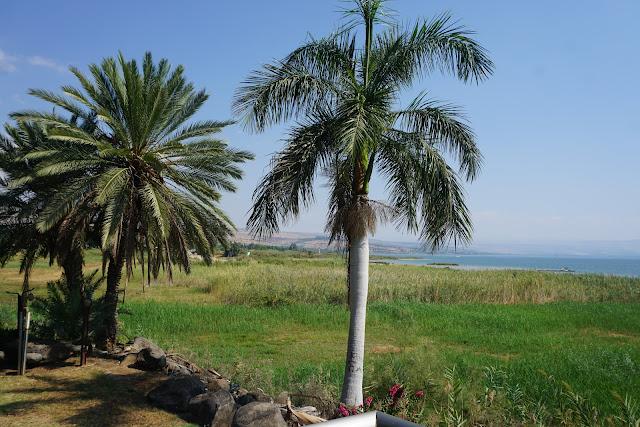 חוף גינוסר