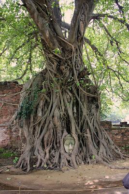Head of Buddha in Ayutthaya Wat Maha That