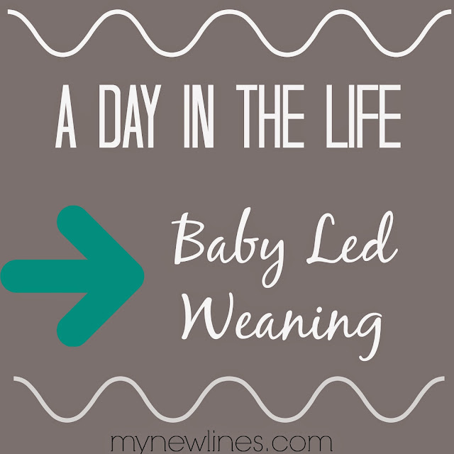 baby led weaning schedule