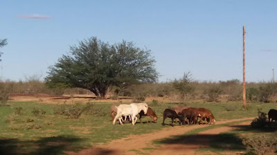 volunteer in a farm - Namibia