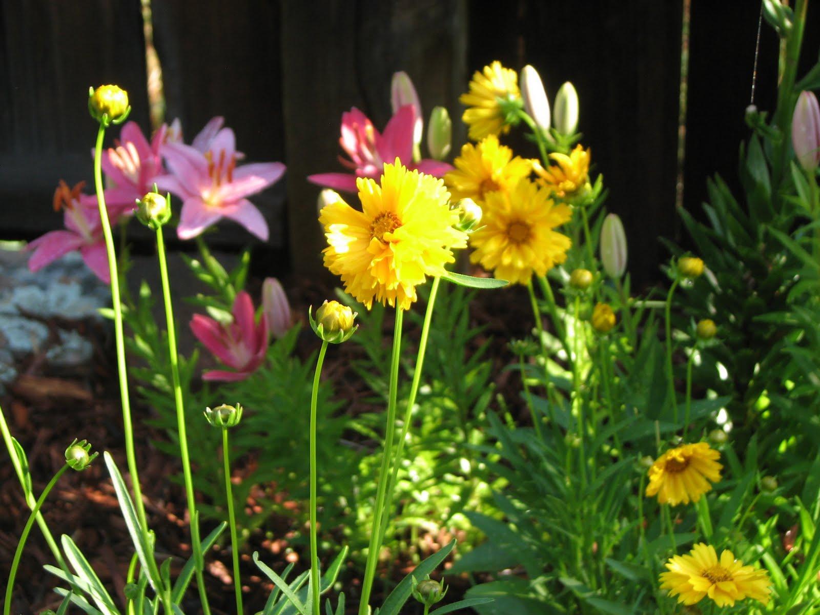 Native Flower Plants | Flower Gardening Made Easy For A Beginner To Achieve A Dream Garden