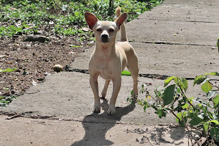 Small dog in Puriscal.