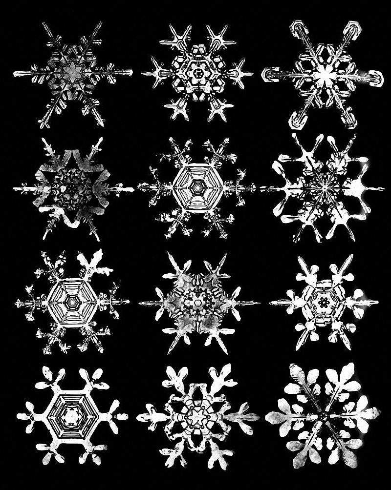 Vermont Dead Line Wilson Snowflake Bentley