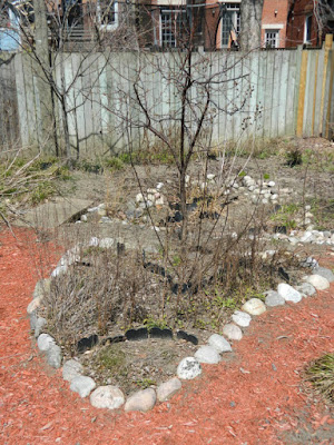 Riverdale Toronto spring garden cleanup before by Paul Jung Gardening Services