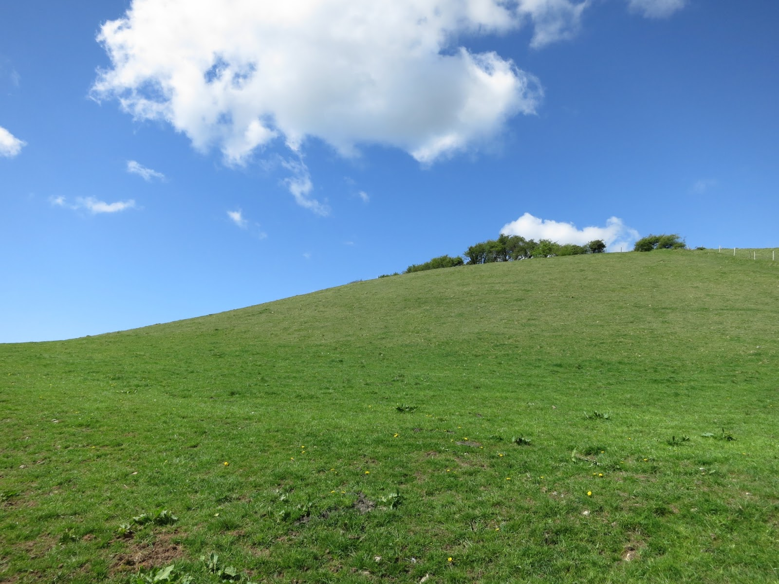 Trees on a tall, wide, grassy hill.