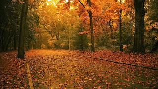 Wallpaper met weg in het bos met herfst bladeren