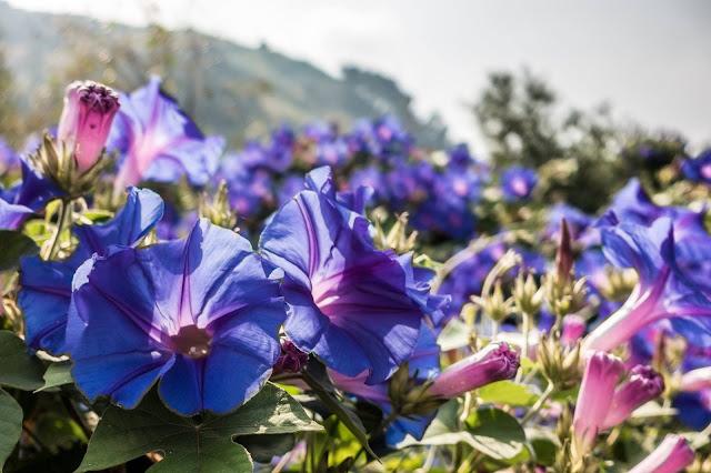 Blümchen Monte Grammondo Ventimiglia