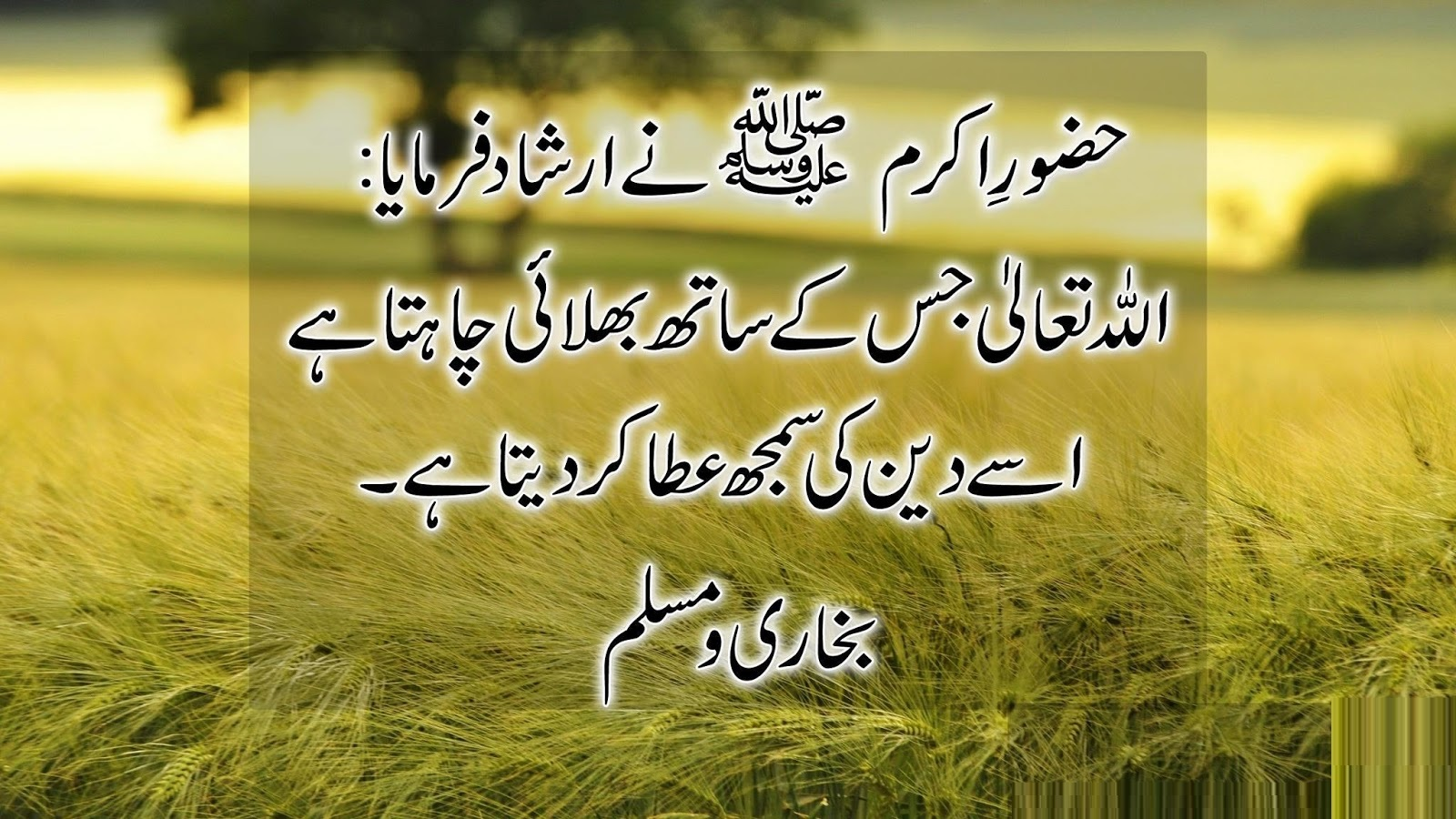 Urdu quotes about life and loves 2017 urdu quotes about life and love 2017 love quotes in urdu images 2017 love quotes in urdu with english translation 2017
