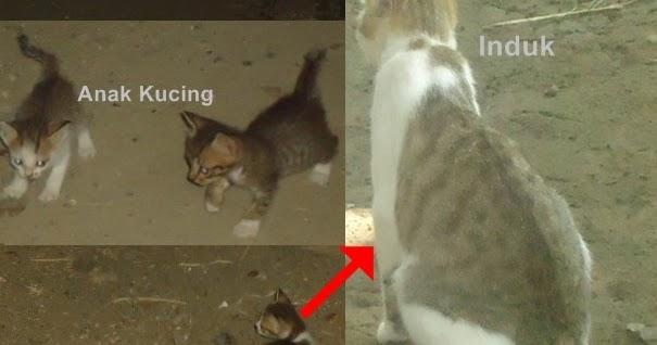Sebutkan 3 Contoh Hewan Yang Mengalami Metamorfosis Tidak ...