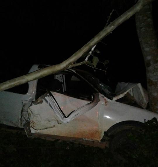Motorista perde controle do veículo e bate em árvore
