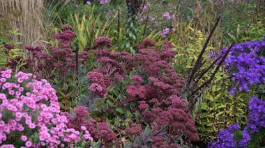 10 variedades (o más) de Hylotelephium (sedums fronterizos) que dan color al otoño