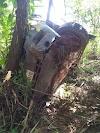 Acidente envolvendo ambulância do TFD de Itaituba deixa duas pessoas feridas na BR 230.